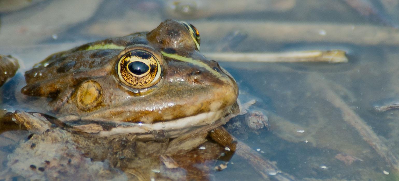 Der Frosch im Wassertropfen