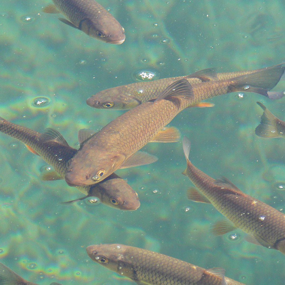 Fischartenspektrum & Signalkrebs