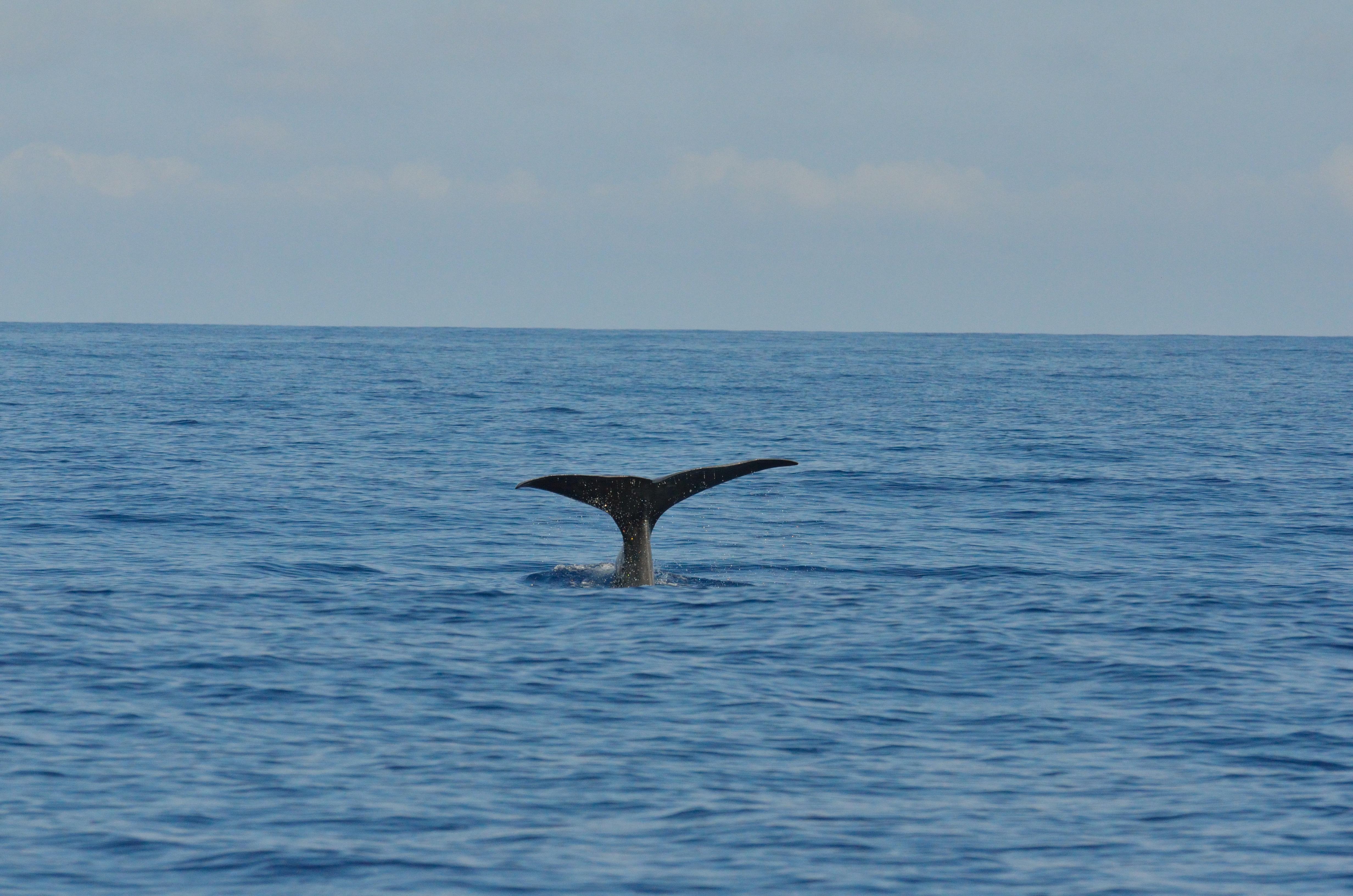 Mit Walen und Delfinen