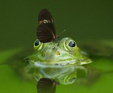 Frosch im Wassertropfen