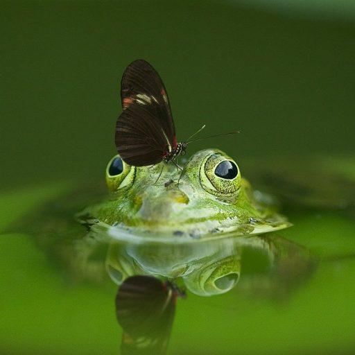 Universtität Innsbruck – Frosch im Wassertropfen