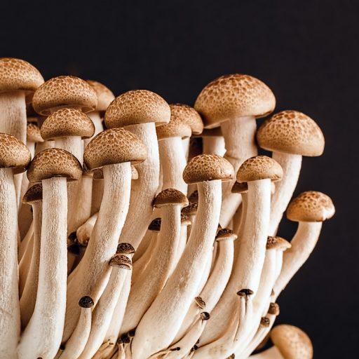 DNA Barcoding Pilzkulturen